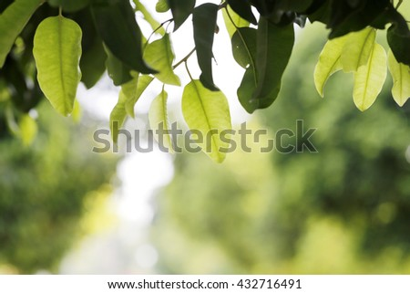 Green leaf texture background - stock photo