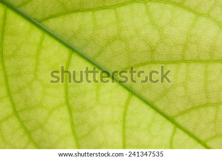 green leaf texture ,Close up - stock photo