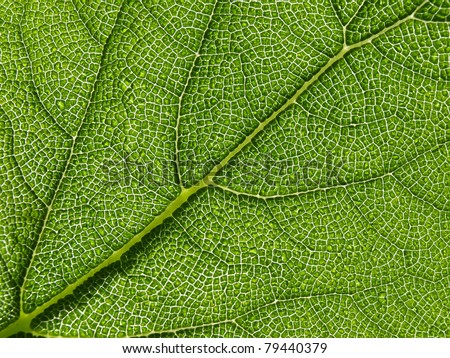 Green leaf texture, macro. Abstract background - stock photo