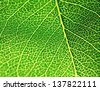 Green leaf texture. Macro image with selective focus. - stock photo