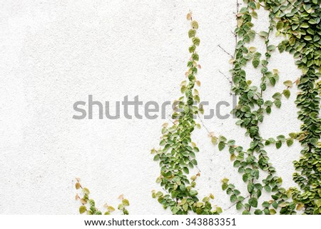 Green leaf texture stone background - stock photo