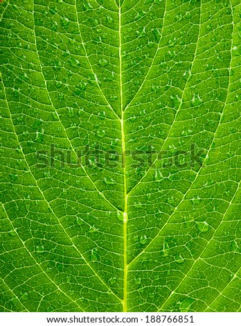 Green leaf texture with droplets. Macro  - stock photo