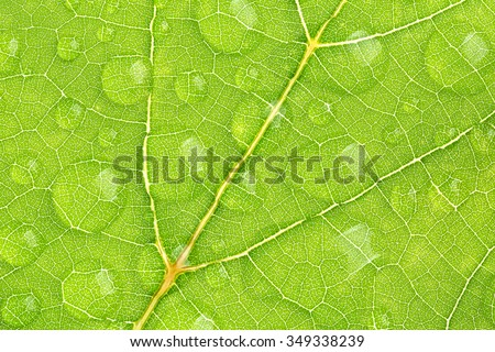 green leaf texture with water droplet, one shot - stock photo