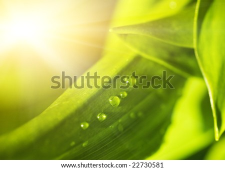 Green leaf texture with water drops on it (shallow DoF) - stock photo