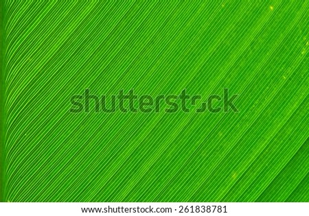 green leaf tree - stock photo