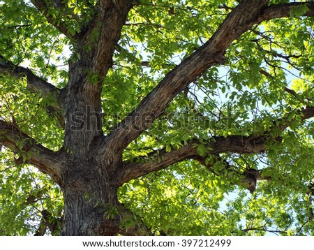 Green Leaf Tree Branches in a Park - stock photo