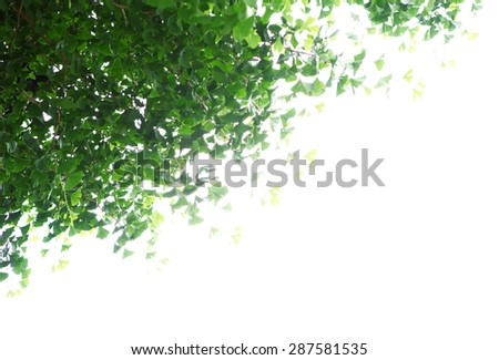 green leaf tree foreground isolated natural concept - stock photo