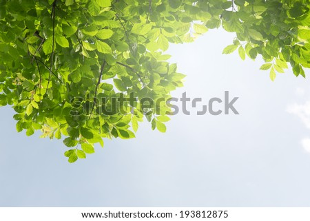 Green leaf under the blue skies. Abstract natural backgrounds for your design