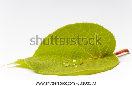 green leaf with big drops on white ground - stock photo