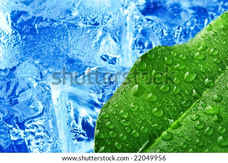 green leaf with blue ice background - stock photo