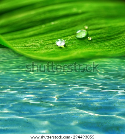 Green leaf with droplets on water background - stock photo