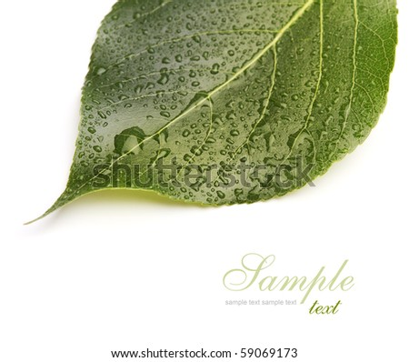 green leaf with drops - stock photo