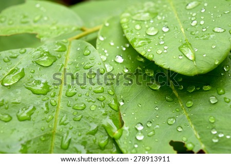 Green leaf with drops of rain water ,nature background - stock photo