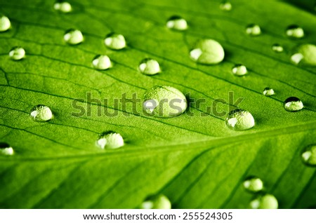 Green leaf with drops of water close up - stock photo