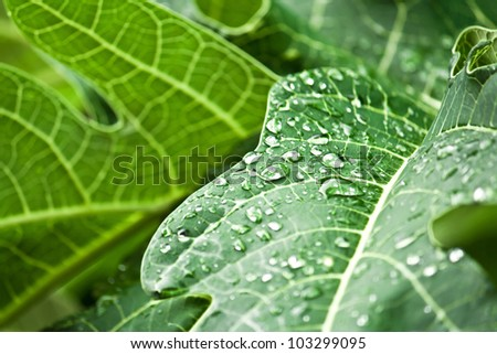 Green leaf with drops of water shining in the sun after rain - stock photo