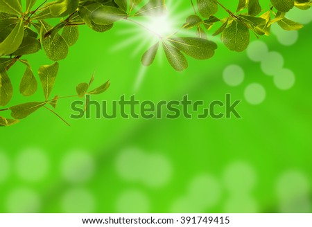 Green leaf with light bokeh and over light the sun on green blurred background, Can used for display or montage your products