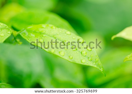 Green leaf with raindrops - stock photo