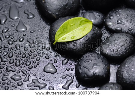 green leaf with stones on wet black background