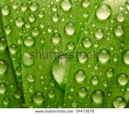 Green leaf with waredrops
