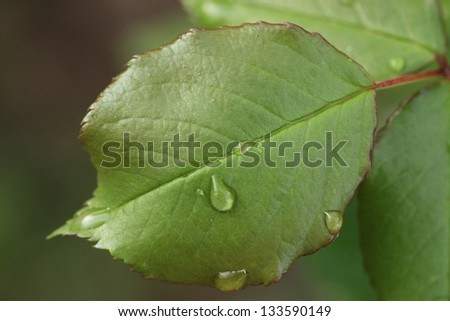 Green leaf with water drop - stock photo