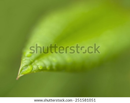 green leaf with water drop