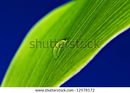 Green leaf with water droplet on a blue background - stock photo