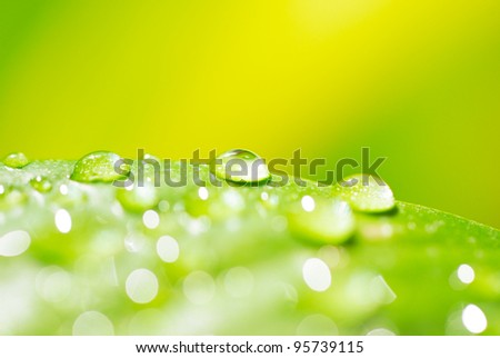 green leaf with water droplets close up - stock photo
