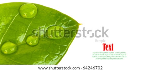 Green leaf with water droplets  on white background - stock photo