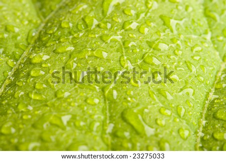 Green leaf with water droplets - shallow DOF