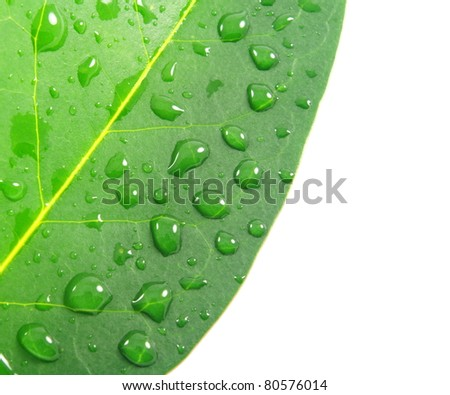 green leaf with water drops and copy space
