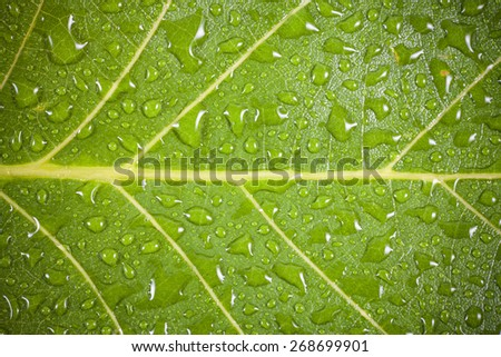 Green leaf with water drops background.