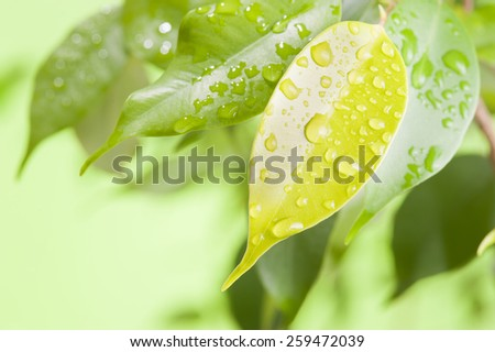 Green leaf with water drops closeup - stock photo