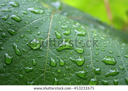Green leaf with water drops. Green leaf after rain. - stock photo