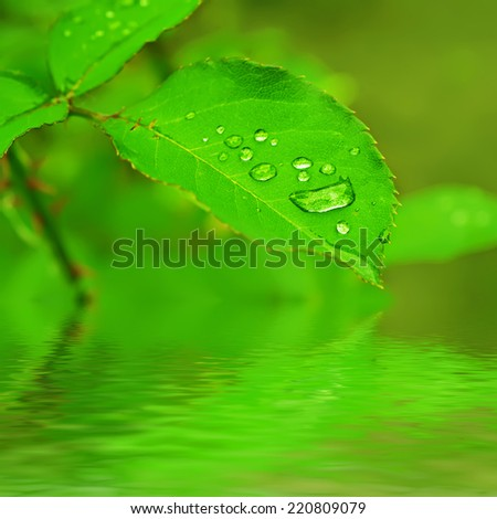 Green leaf with water drops, macro, nature background with water reflection