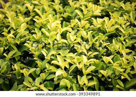 Green leafage - stock photo