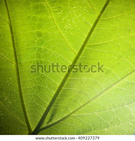 green leafe closeup texture - stock photo