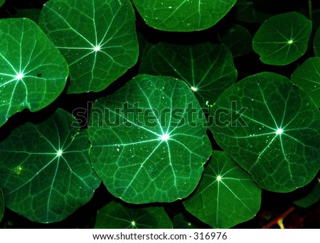 Green Leafs - stock photo
