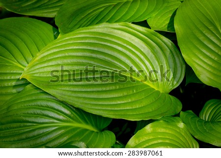 Green leafs - abstract natural background - stock photo