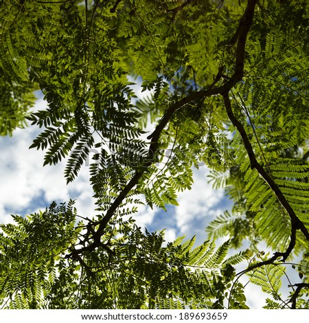 Green leafs against a blue sky with clouds - stock photo