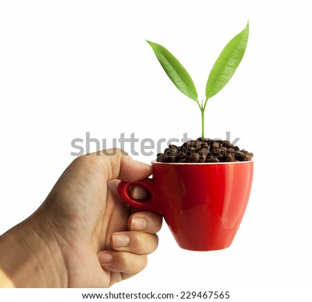 Green leafs and coffee beans in red cup isolated on white background  - stock photo
