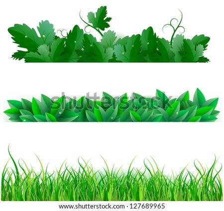 Green Leafs And Grass, Isolated On White Background. Vector Illustration