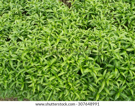 green leafs for background - stock photo