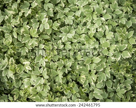 green leafs texture - stock photo