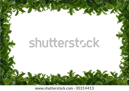 Green leafy hedge frame over a white isolated background with text space - stock photo