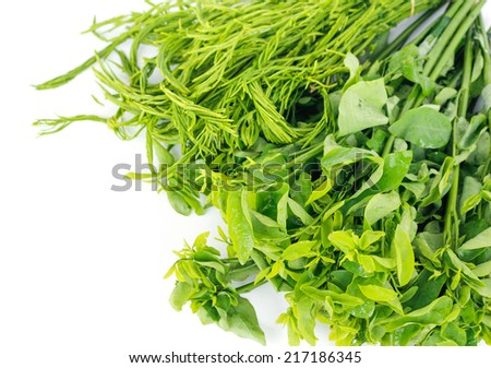 Green leafy vegetables are non-toxic. - stock photo