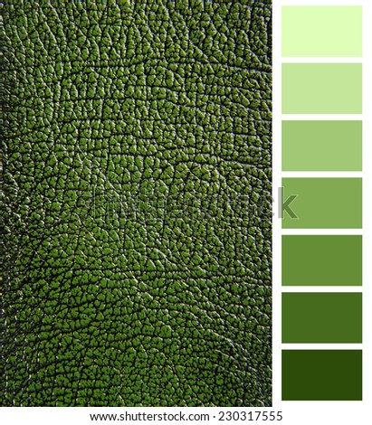 green leather color complimentary chart  - stock photo