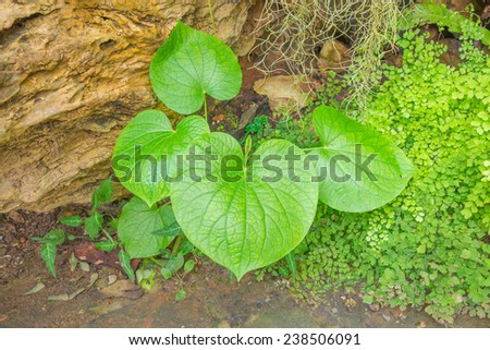 Green leave - stock photo