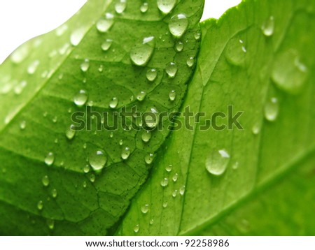 Green leave after the rain, with fresh water drops - stock photo