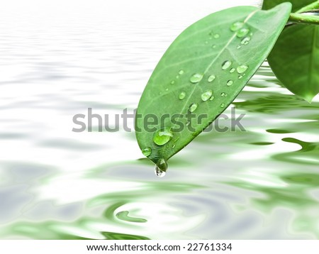 green leave at brunch with drops against the water background - stock photo