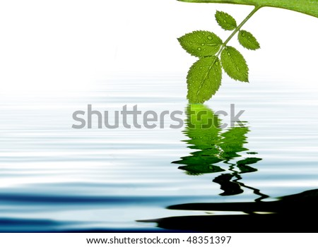 green leave at the water with reflection - stock photo